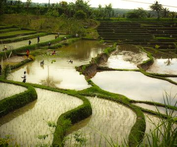 The unknown rice terraces of Blimbing