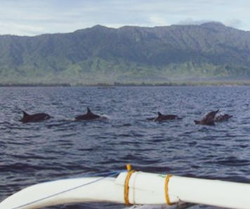 Watch dolphins off the coast of Lovina