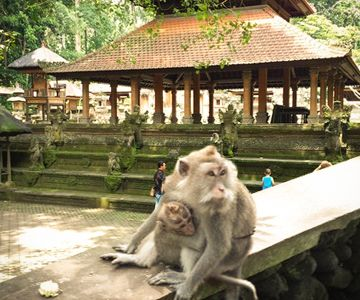 Visit the Monkey Forest in Ubud